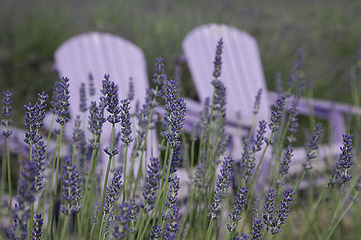 Chairs in Lavender Fields by Denise Rafkind