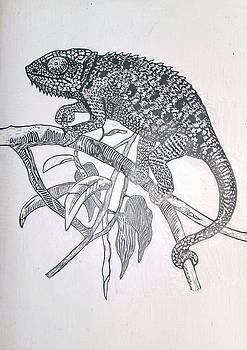 Chameleon by Chris Hedges