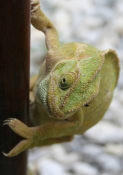 Tracey Harrington-Simpson - Chameleon Fifty Shades of Green
