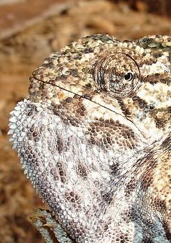 Tracey Harrington-Simpson - Chameleon Macro Portrait