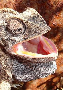 Tracey Harrington-Simpson - Chameleon with Happy Smiling Expression