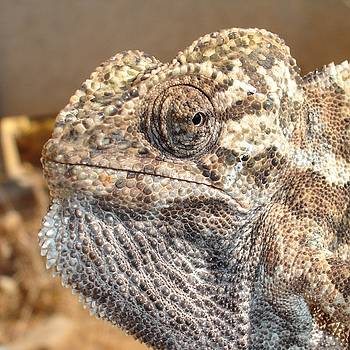 Tracey Harrington-Simpson - Chameleon With Sinister Facial Expression
