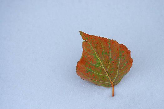 Change of Seasons by Marie Leslie