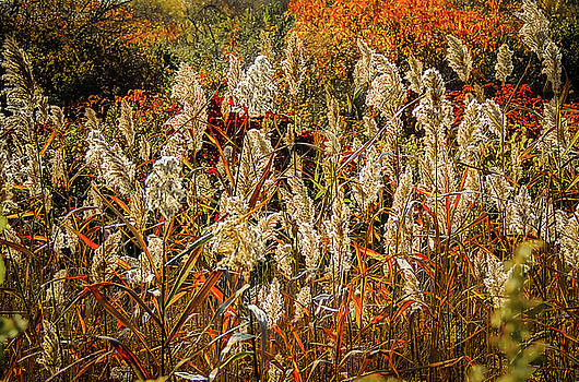 Changing Season by Robert Mitchell