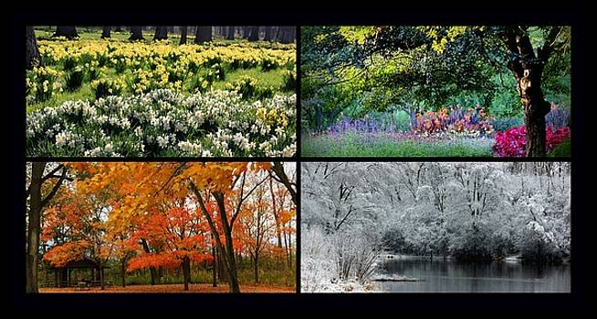 Rosanne Jordan - Changing Seasons