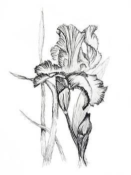 Charcoal Iris by Tiffany Lynn Thielke