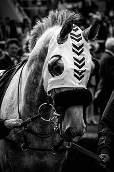 Charismatic race horse by Timothy Lens Attack