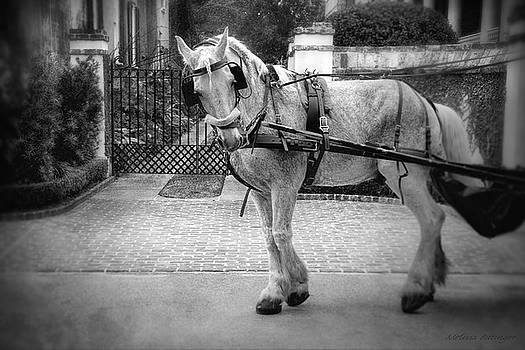 Charleston Carriage Horse Black and White by Melissa Bittinger