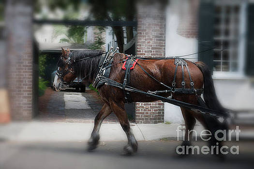 Charleston Carriage Ride by Dale Powell