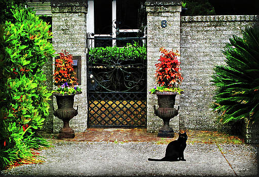 Joan  Minchak - Charleston Cat