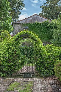 Dale Powell - Charleston Garden Ivey
