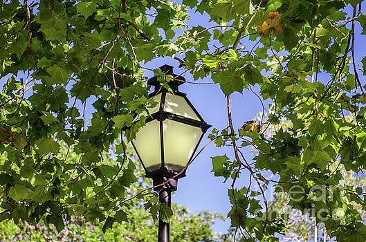 Dale Powell - Charleston Lamp Post