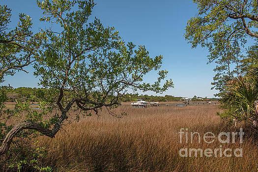 Dale Powell - Charleston Lowcountry Salt Marsh