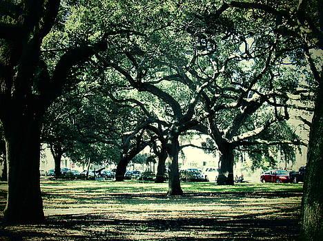 Charleston Oaks by Brenda Konitzer