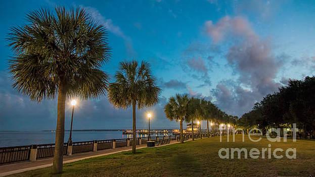Charleston Palms by Robert Loe