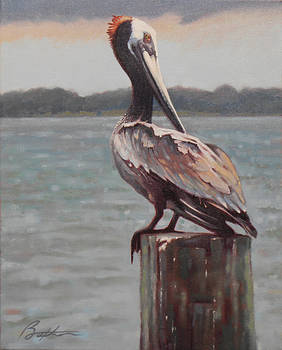 Charleston Pelican by Todd Baxter