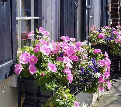 Charleston Pink White and Blue Pansies  by Elena Tudor