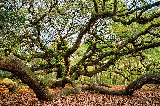 Charleston SC Angel Oak Tree South Carolina Landscape by Dave Allen
