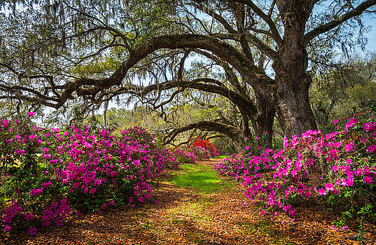Charleston SC Spring Flowers Scenic Landscape South Carolina  by Dave Allen