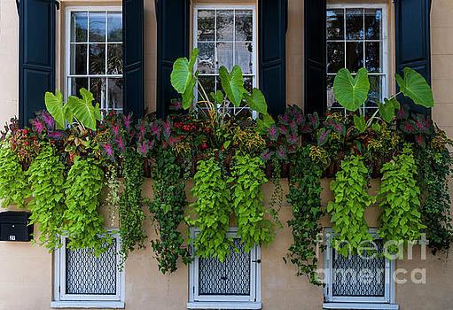 Dale Powell - Charleston South Carolina Flower Boxes