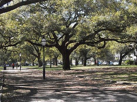Charleston Trees by Casey Bingham