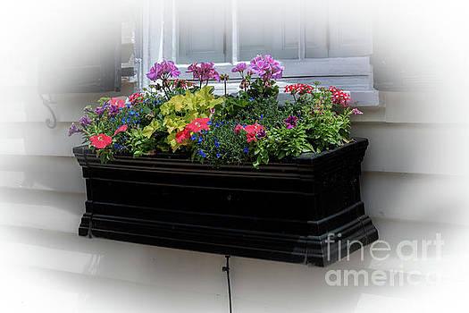 Dale Powell - Charleston Window Box