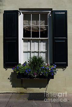 Dale Powell - Charleston Window Display