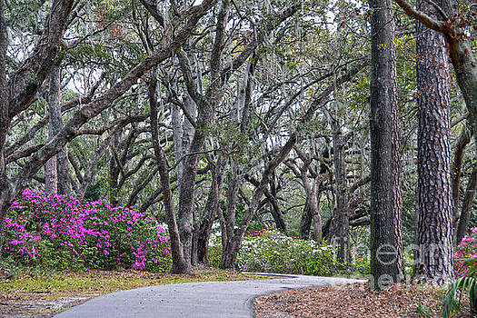 Charleston Woodland Spring Walk by Catherine Sherman
