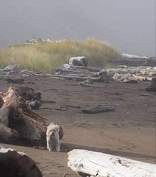 Lisa Dunn - Charlie on Irish Beach