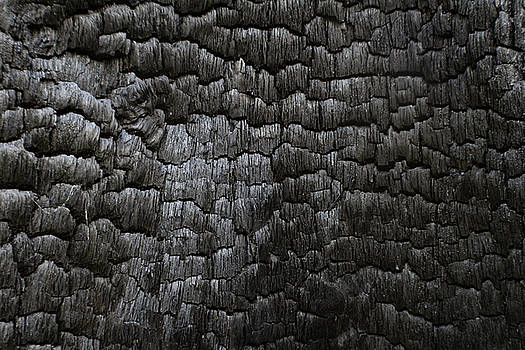 Charred black wood log interior burned in a forest fire by Natalie Schorr
