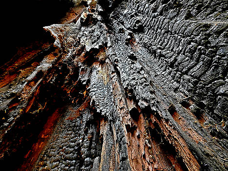 Charred Cedar by Brian Chase