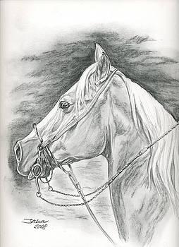 Charros horse by Jana Goode