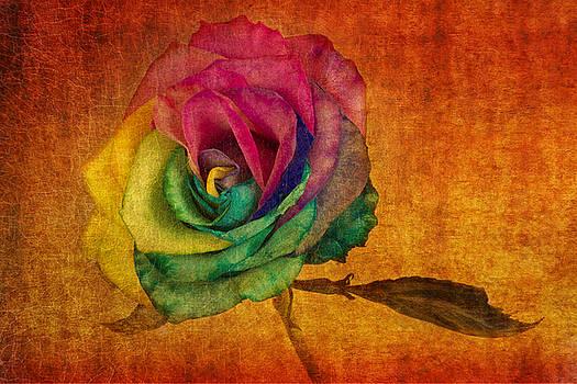Chasing Rainbows by Marina Kojukhova
