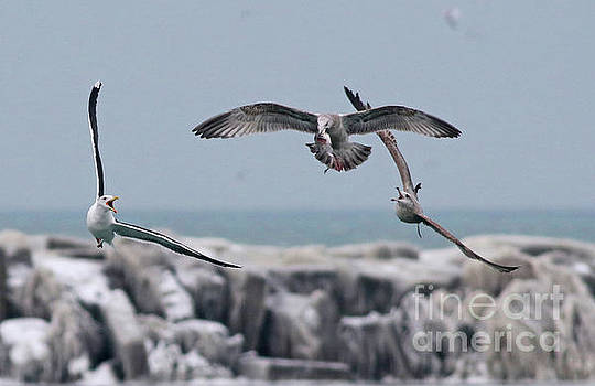 Chasing the Fish by Debbie Parker