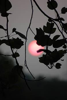Chasing the Sun by Eddy Bateman