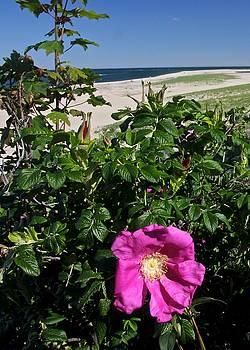 Chatham Flower by Jim Gillen