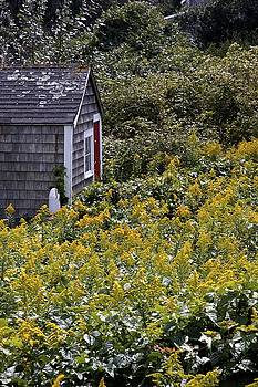 Chatham Shed by Jim Gillen