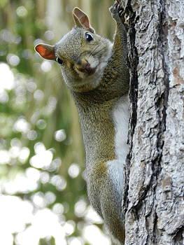 Cheeky Squirrel by Amber Bobbitt