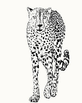 Cheetah Full Figure, Front-on View by Scotch Macaskill