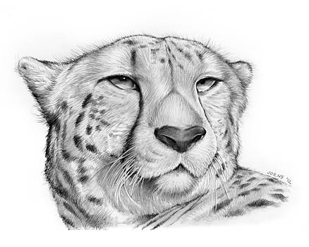 Greg Joens - Cheetah