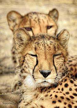 LeeAnn McLaneGoetz McLaneGoetzStudioLLCcom - Cheetah Pair