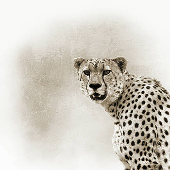 Cheetah Sepia Closeup Square by Susan Schmitz