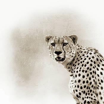 Susan Schmitz - Cheetah Sepia Closeup Square