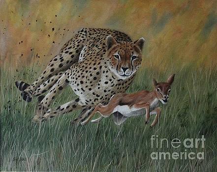 Cheetah by Sid Ball