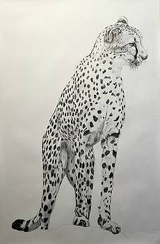 Cheetah  by Tito Santiago