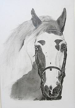 Cherokee by Marlene Piccolin