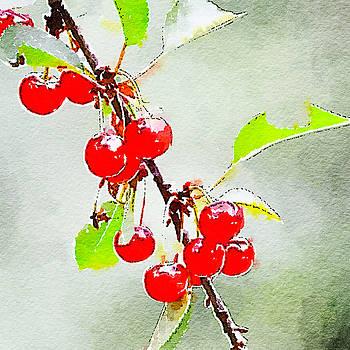 Ronda Broatch - Cherries 1
