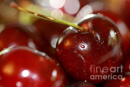 Cherries  by A New Focus Photography