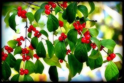 Cherries by Priyadharsini Jagadeesan