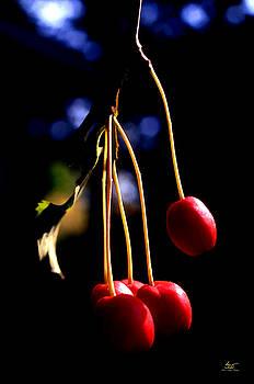 Sam Davis Johnson - Cherries